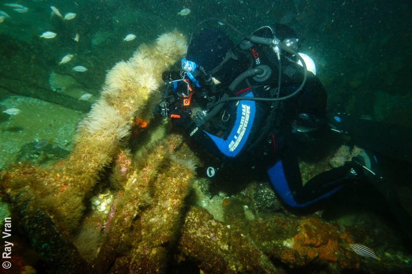 Lady Darling Wreck, Montague Island – 18 Sept 2020
